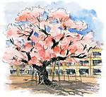 Sakura34
